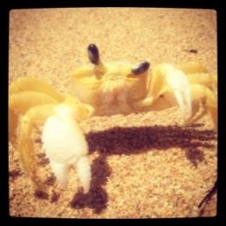 Crabby in Dorado.